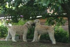 Artus und Bella