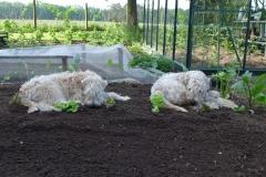 Lotte und Bella bei der Gartenarbeit